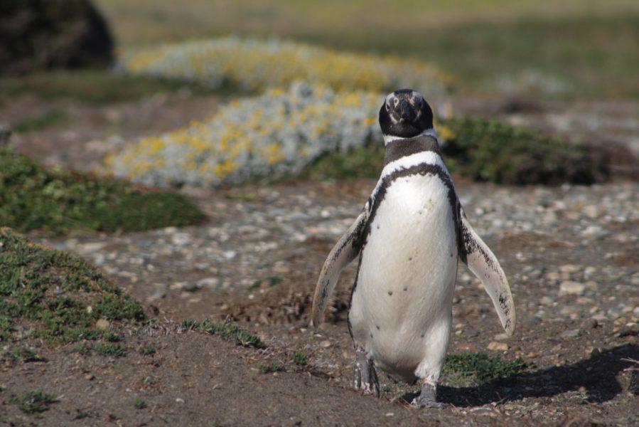 Tučniak ako učiteľ človeka - duša ženy